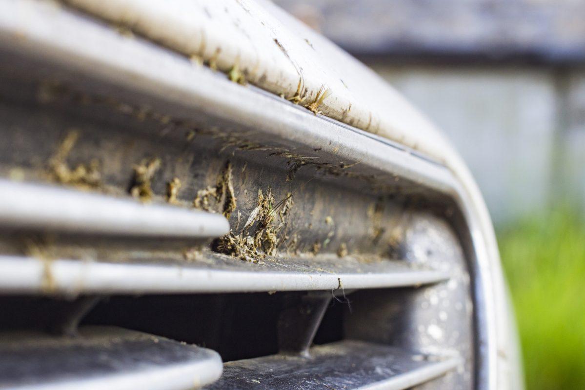 dode-insecten-van-je-auto-verwijderen-insectenverwijderaar-mug-op-auto